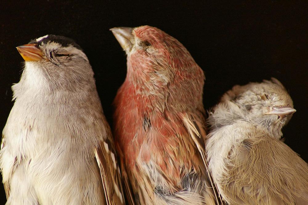 three-birds